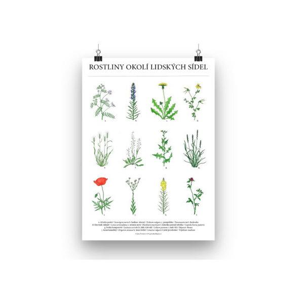 Obrázek Plakát Rostliny okolí lidských sídel