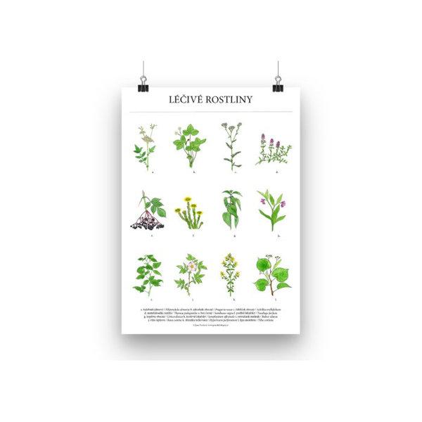 Obrázek Plakát léčivé rostliny