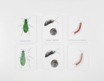Obrázek Třísložkové karty hmyz a jiní bezobratlí