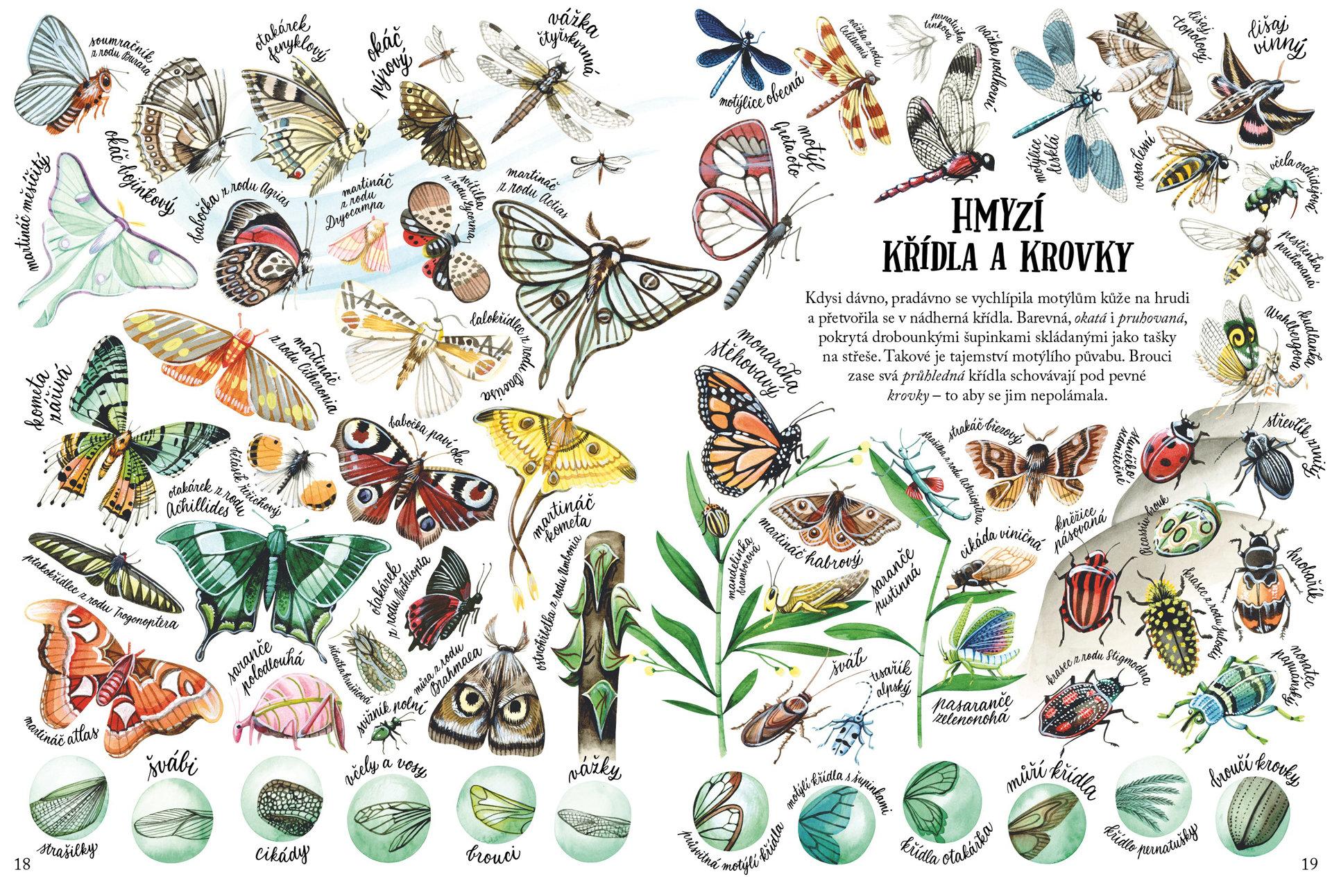 Obrázek Malovaná příroda. Tvary a vzory v přírodě