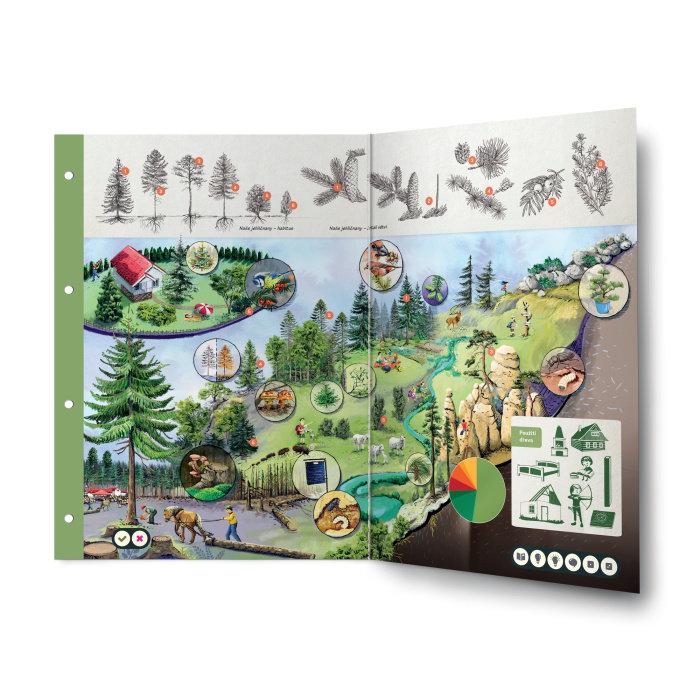 Obrázek Kouzelné čtení - Dvoulist Jehličnaté stromy